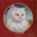 miniature portrait of a white angora cat